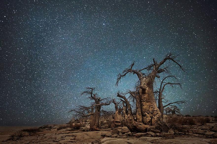 fotos-arboles-viejos-noche-estrellas-beth-moon (4)