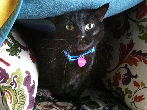 gatos-mayores-adoptados (16)