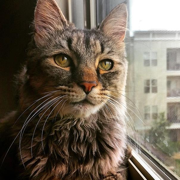 gatos-mayores-adoptados (2)
