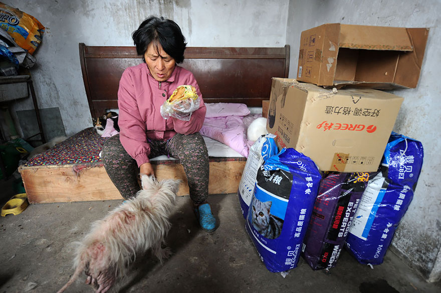 perros-rescatados-festival-yulin-china (10)