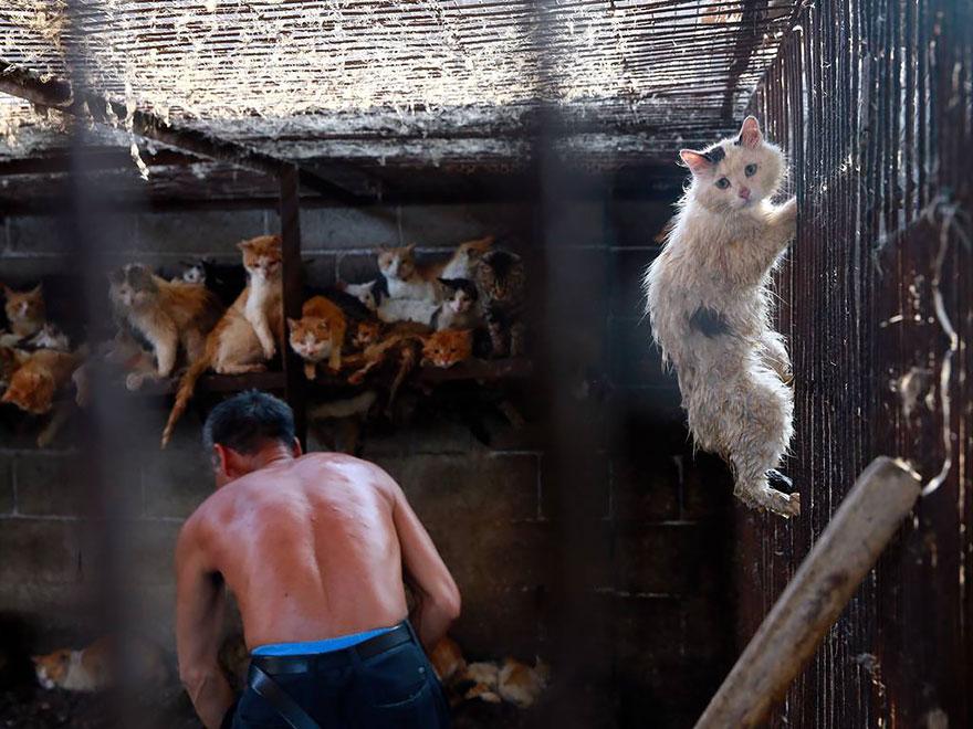 perros-rescatados-festival-yulin-china (20)