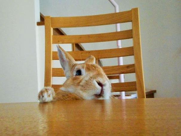problemas-personas-bajas-conejo-koron-japon (1)
