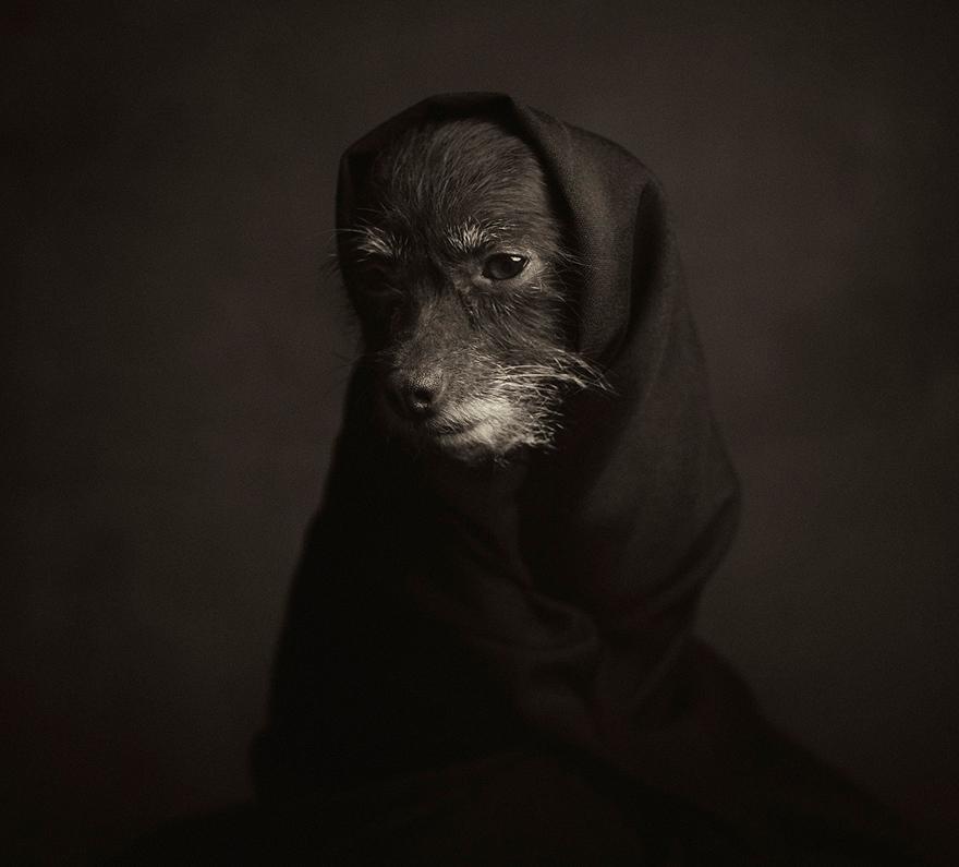 retratos-animales-emociones-humanas-vincent-lagrange (8)