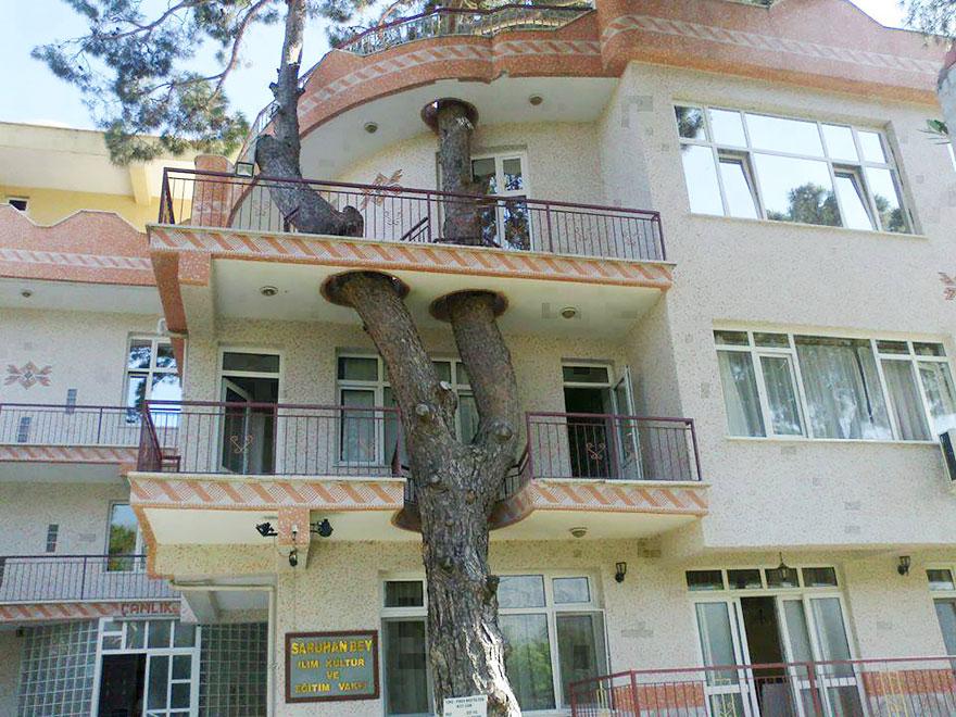 arquitectura-alrededor-arboles (5)