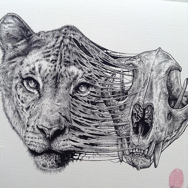 dibujos-esqueletos-animales-paul-jackson (10)