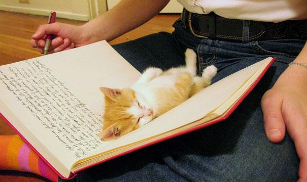 gatos-durmiendo (1)