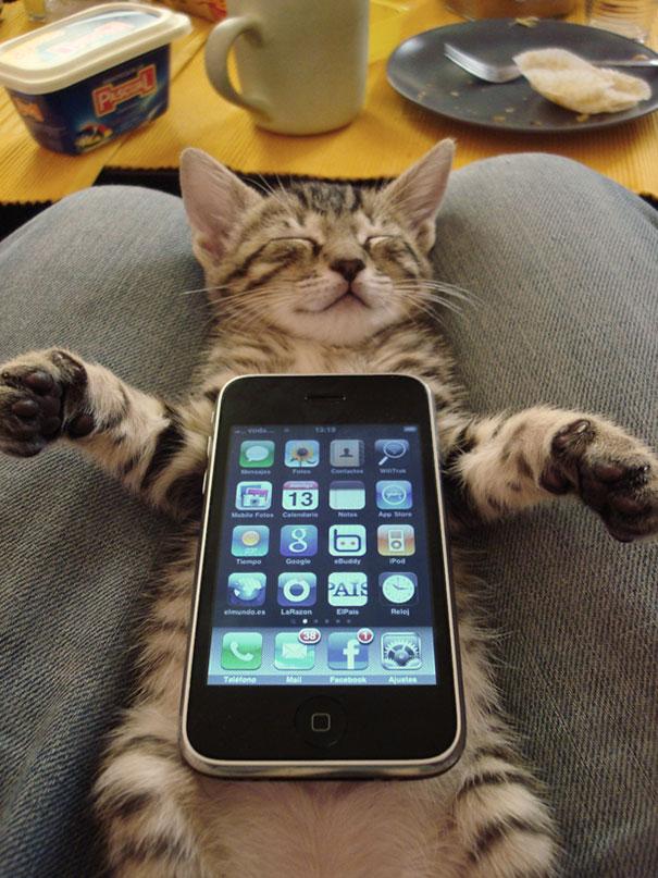 gatos-durmiendo (13)