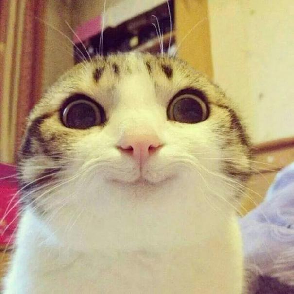 gatos-sonrientes (4)