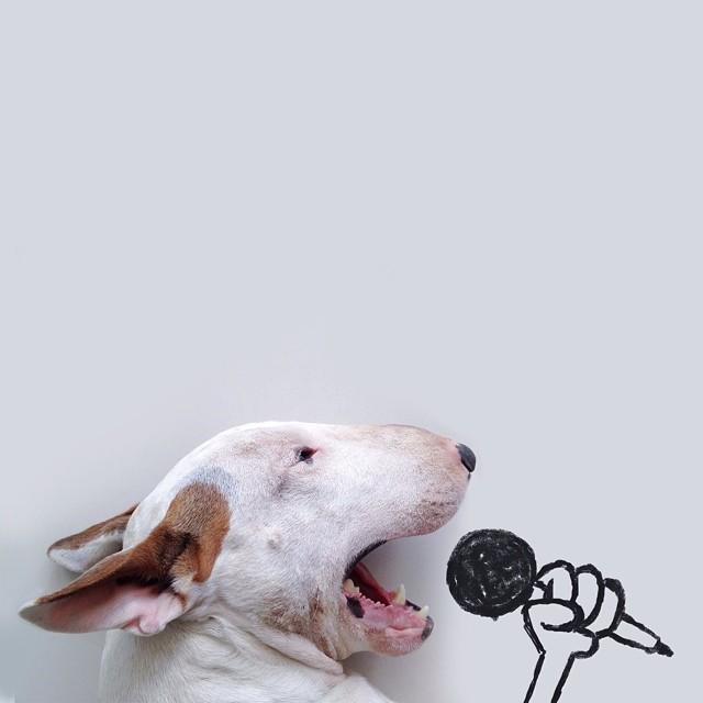 ilustraciones-interactivas-perro-jimmy-choo-rafael-mantesso (1)