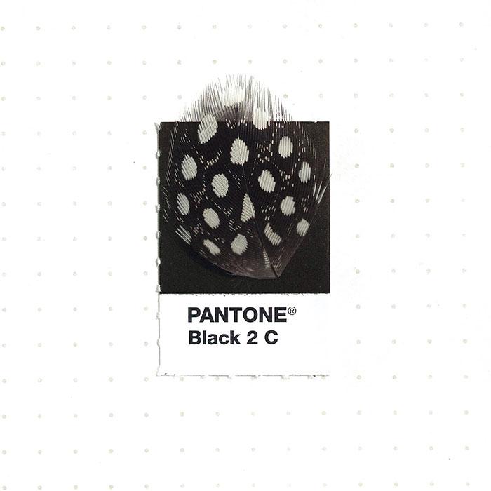 parejas-objetos-cotidianos-muestras-color-pantone-pms-inka-mathews (19)