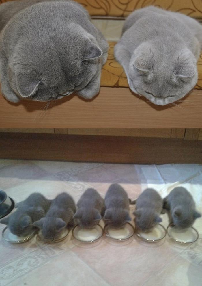 fotos-familia-gatos-gatitos (21)