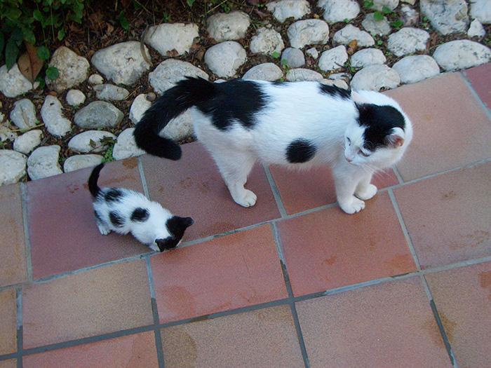 fotos-familia-gatos-gatitos (4)