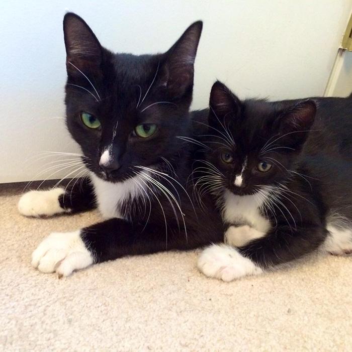 fotos-familia-gatos-gatitos (44)