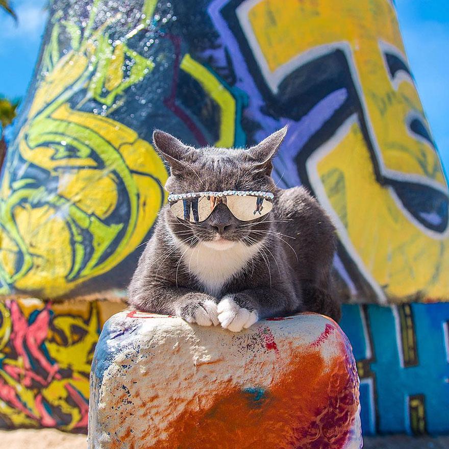 gatos-mostrando-emociones (13)