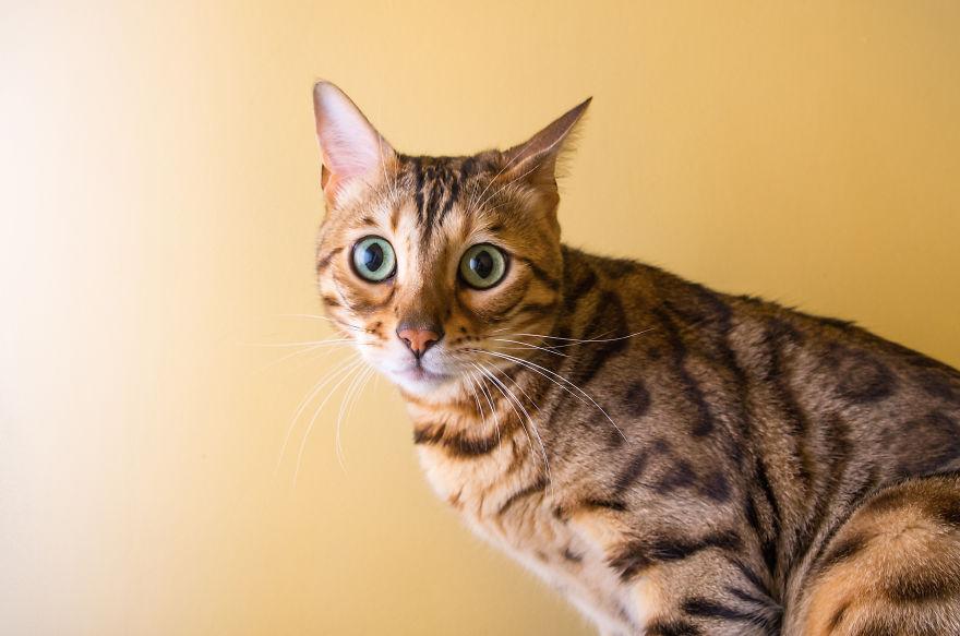 gatos-mostrando-emociones (5)