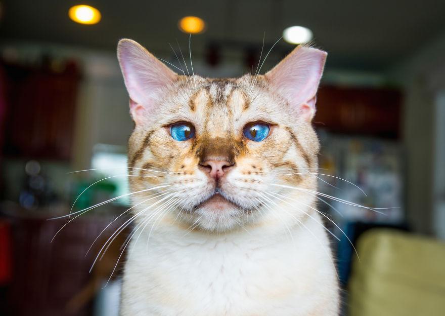 gatos-mostrando-emociones (8)