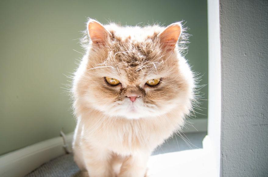 gatos-mostrando-emociones (9)