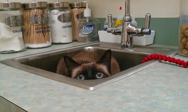 gatos-visitando-veterinario (12)