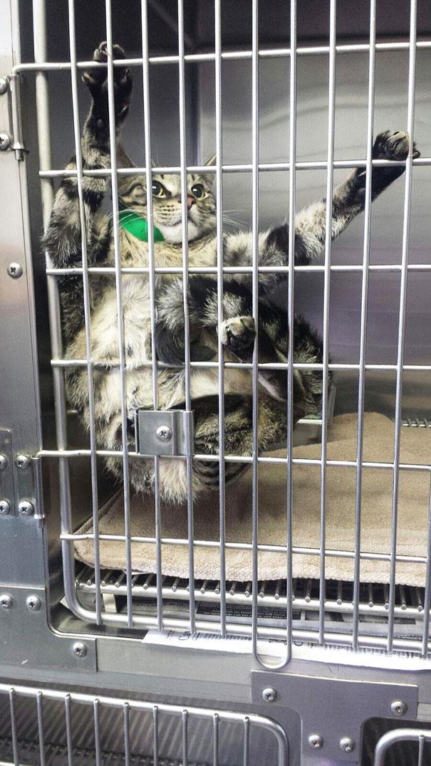 gatos-visitando-veterinario (8)