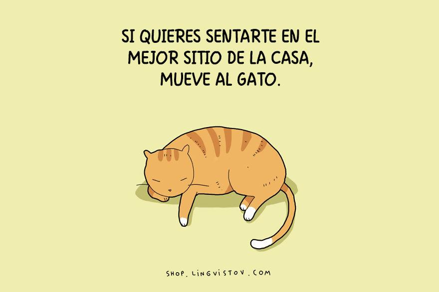 guia-ilustrada-verdades-gatos-11