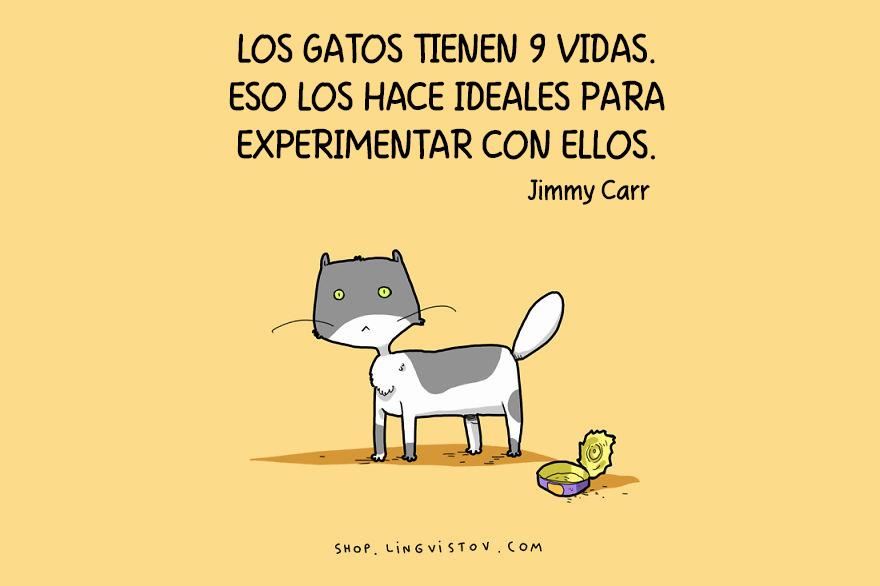 guia-ilustrada-verdades-gatos-5