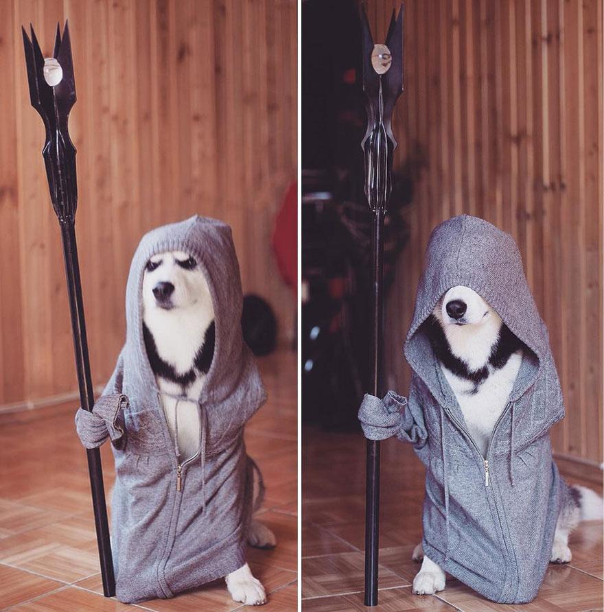 instagram-perros-husky-siberiano-erica-tcogoeva (3)