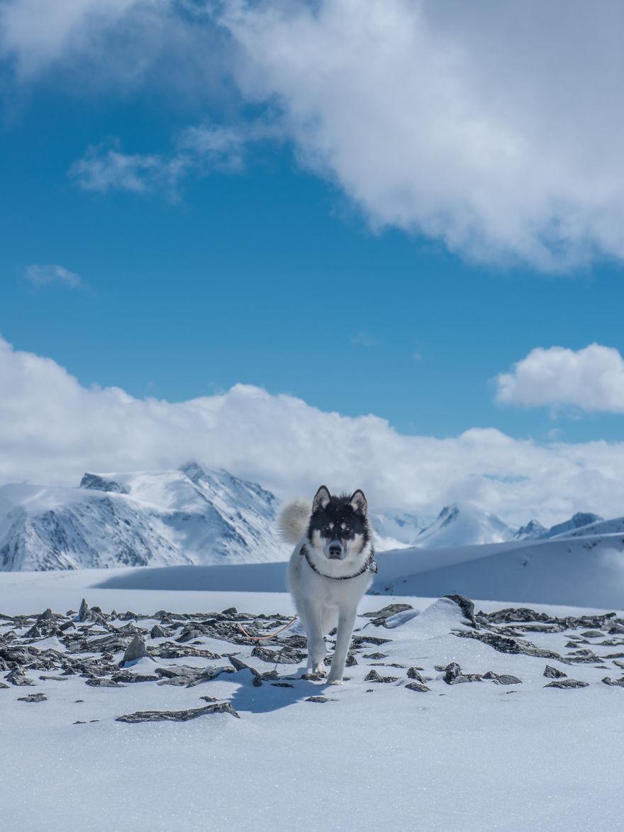 acampada-esqui-noruega-perro-husky-henrik-vikse (11)