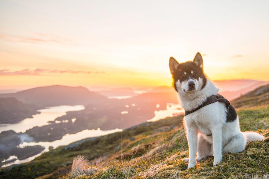 acampada-esqui-noruega-perro-husky-henrik-vikse (4)