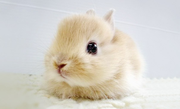 dia-internacional-conejos (12)