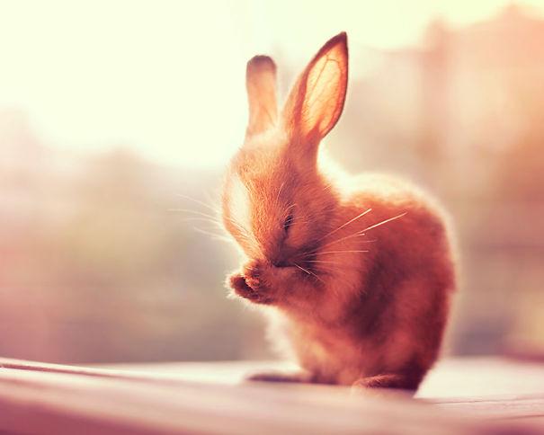 dia-internacional-conejos (16)