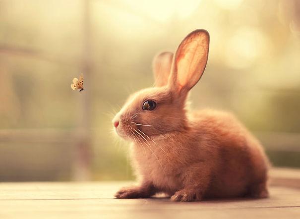 dia-internacional-conejos (17)