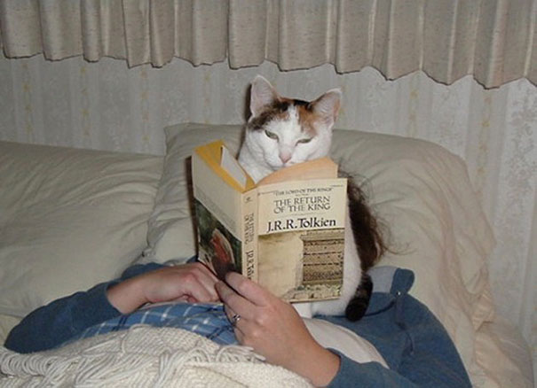 gatos-ajenos-espacio-personal (9)