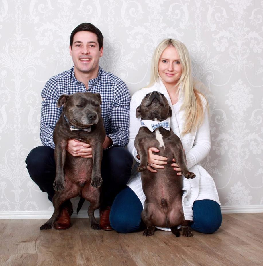 hermanos-perros-bull-terriers-blueboys-instagram (16)