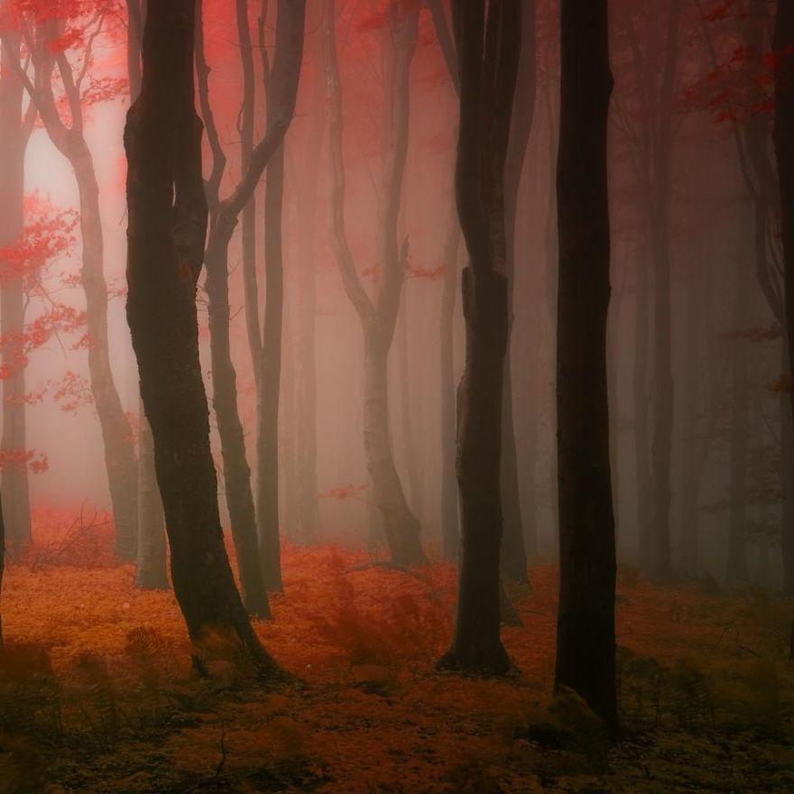 fotografia-bosques-otono-janek-sedlar (18)