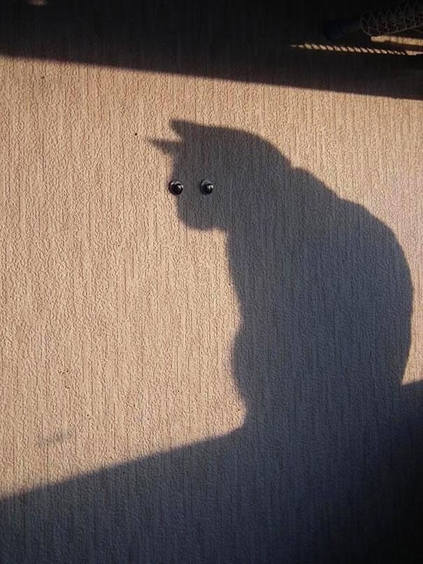 fotos-gatos-momento-justo (11)