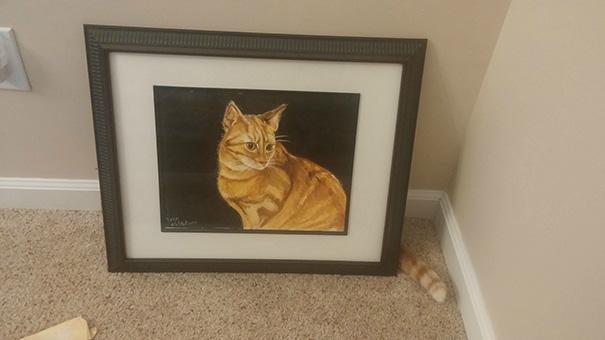 fotos-gatos-momento-justo (13)