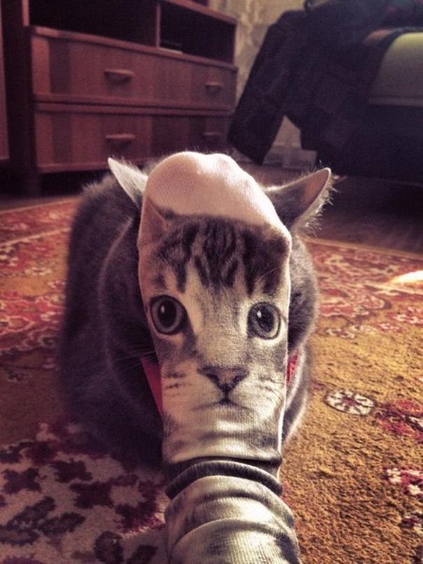 fotos-gatos-momento-justo (14)