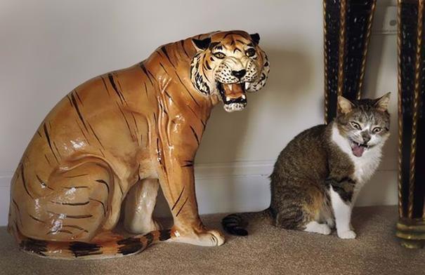 fotos-gatos-momento-justo (3)