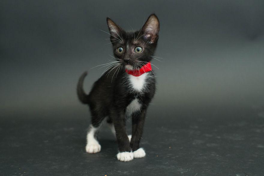 fotos-gatos-negros-adopcion (1)