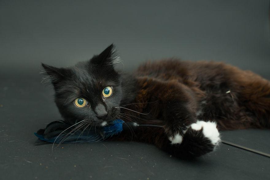 fotos-gatos-negros-adopcion (4)