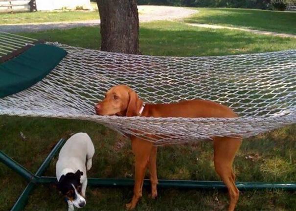 perros-cometiendo-errores (31)