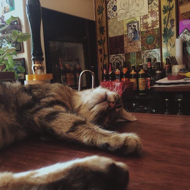 bar-gatos-pub-bag-of-nails-bristol (9)