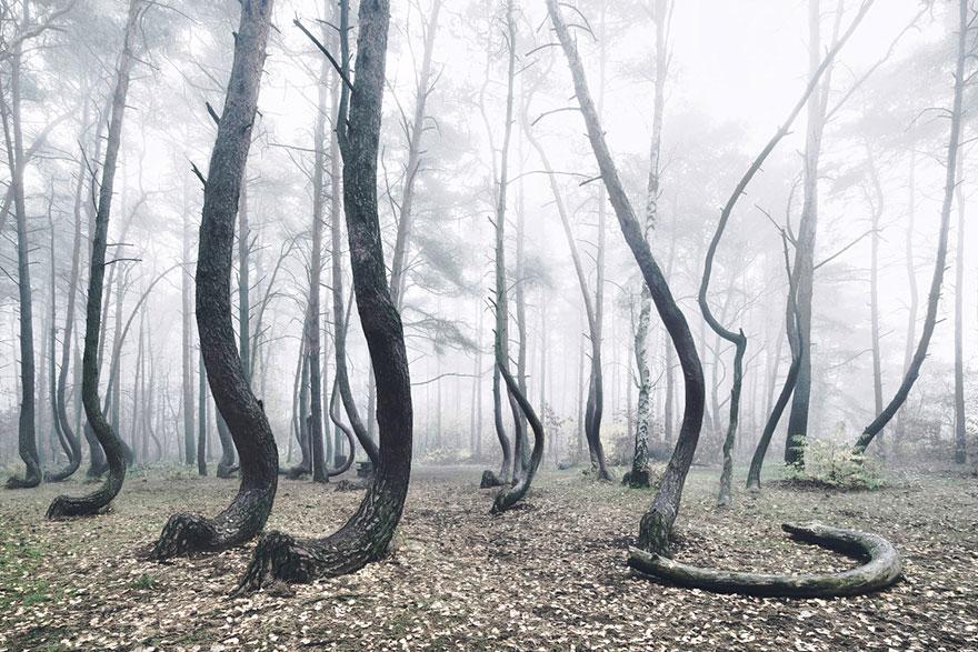 bosque-torcido-krzywy-las-kilian-schonberger-poland-polonia (2)