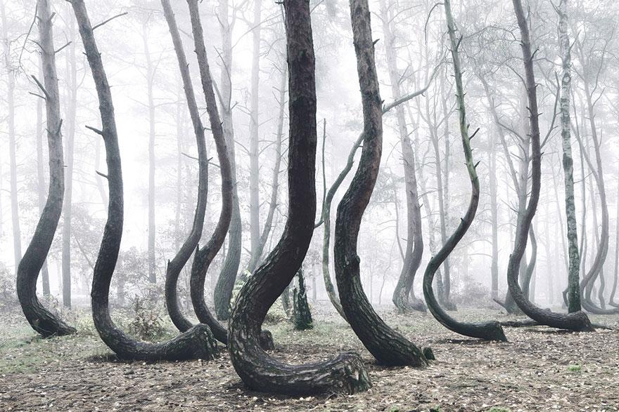 bosque-torcido-krzywy-las-kilian-schonberger-poland-polonia (3)