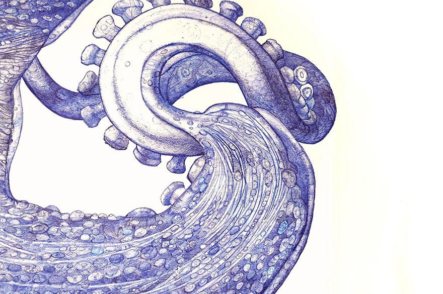 dibujo-pulpo-boligrafo-raymond-cicin (4)