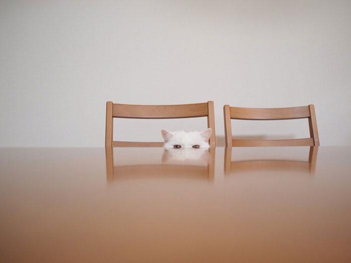 gato-anciano-disfrazado-ura-japon (1)