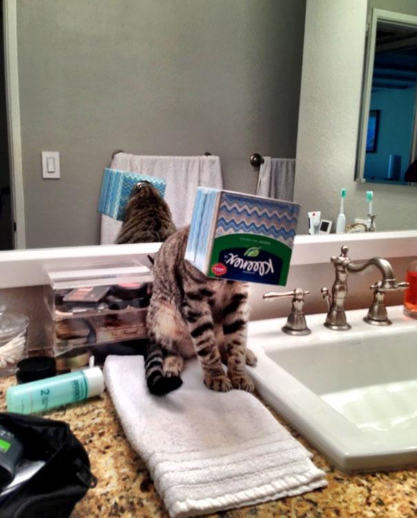 gatos-cometiendo-errores (25)