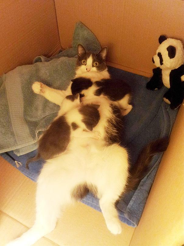 orgullosas-mamas-gato (12)