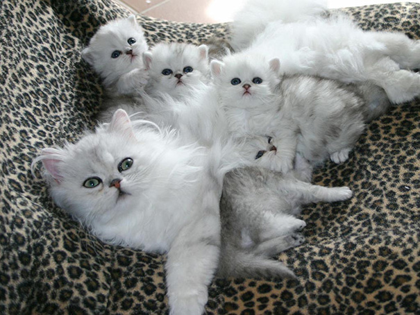 orgullosas-mamas-gato (7)