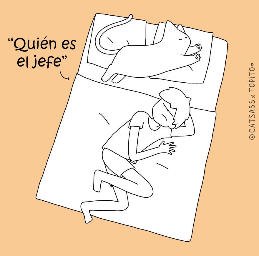 posturas-dormir-gato-catsass-2